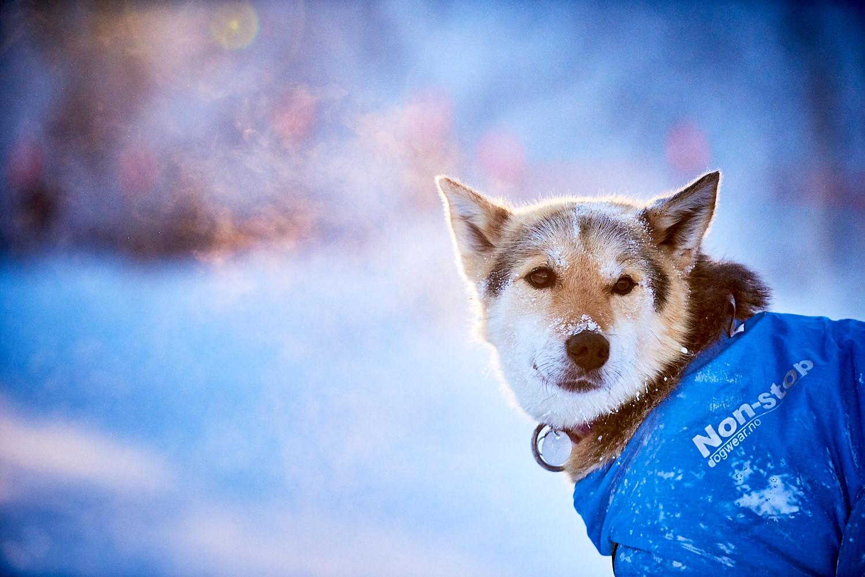 Yukon-Quest-Sled-Dog-Race-Photography-Alaska-Yukon-Chance-McLaren-Photography-18.jpg