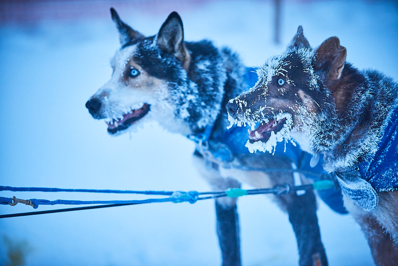Yukon-Quest-Sled-Dog-Race-Photography-Alaska-Yukon-Chance-McLaren-Photography-19.jpg