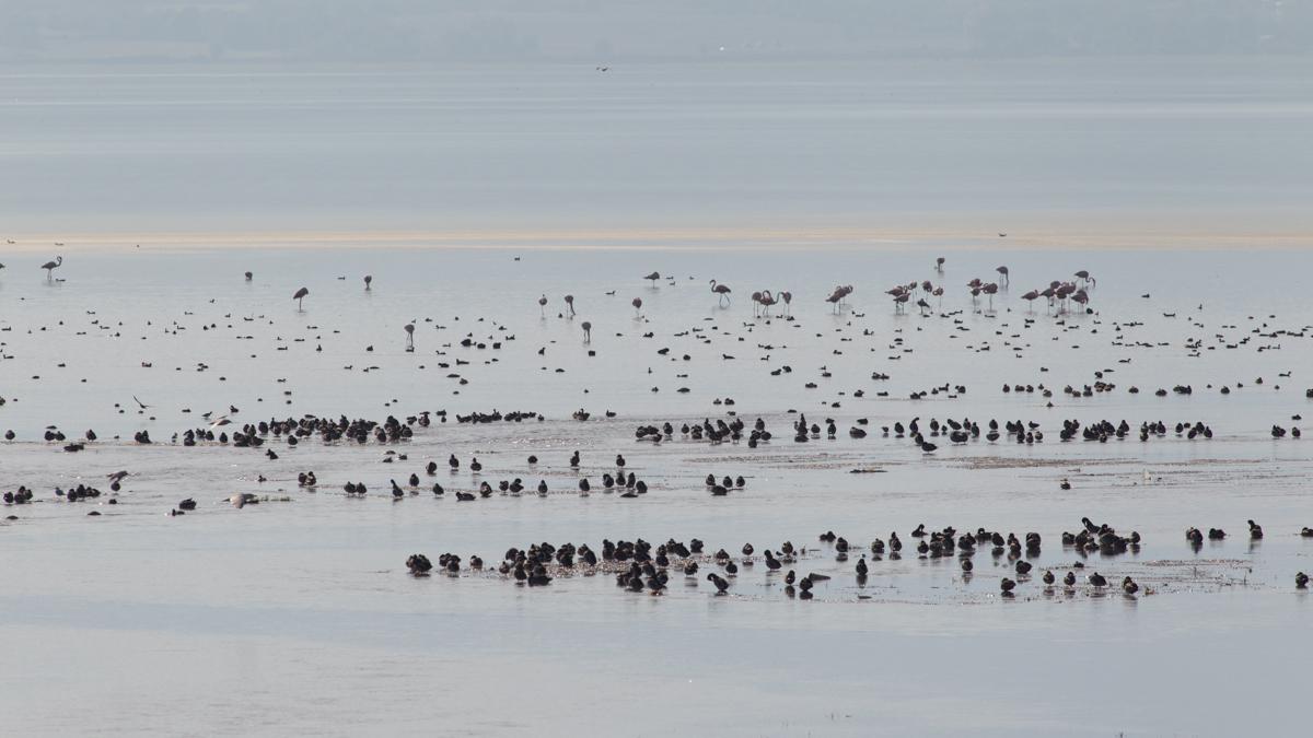water birds at Lake Kerkini photographed during our 5 day autumn wildlife & bird photography tour of Lake Kerkini