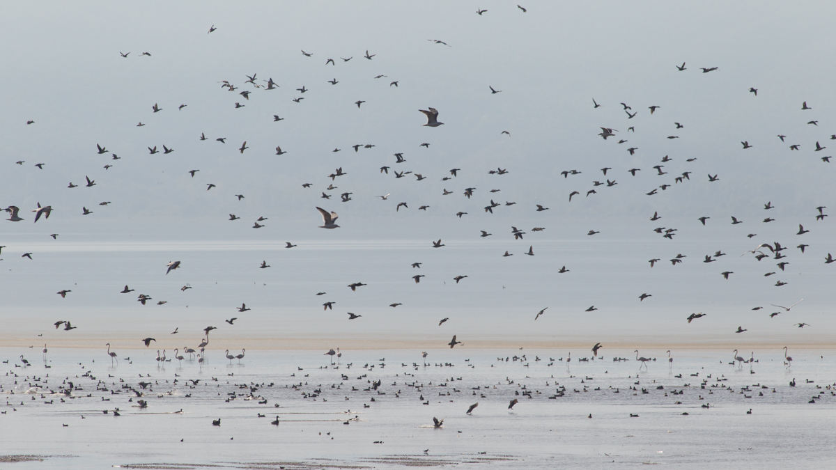 birdlife photographed during our autumn 5 day wildlife and bird photography tour of Lake Kerkini