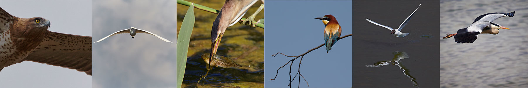 photos of birds made during one of our wildlife and bird photography workshops of Lake Kerkini