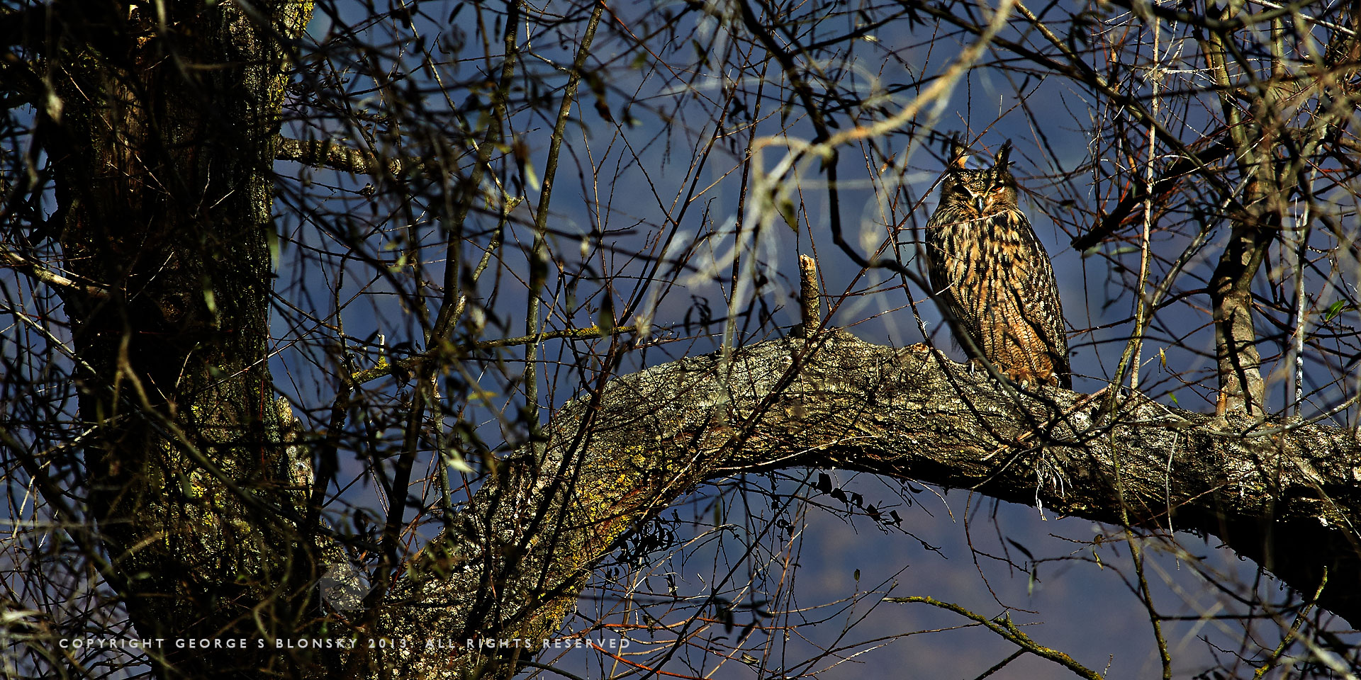 Eagle Owl roosting in the Lake Kerkini submerged forest