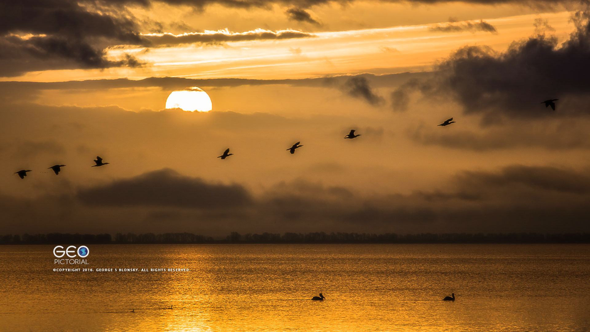 CORMORANTS IN FLIGHT ACROSS THE RISING SUN photographed during one our purely pelicans photography workshops at Lake Kerkini