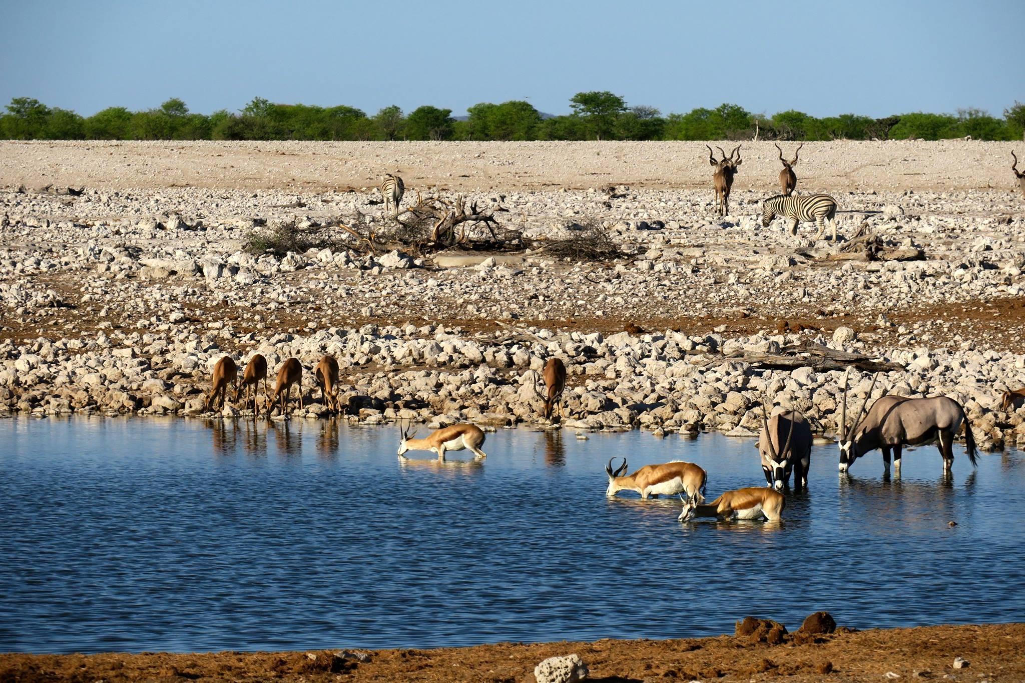 水飲み場に集まる動物達