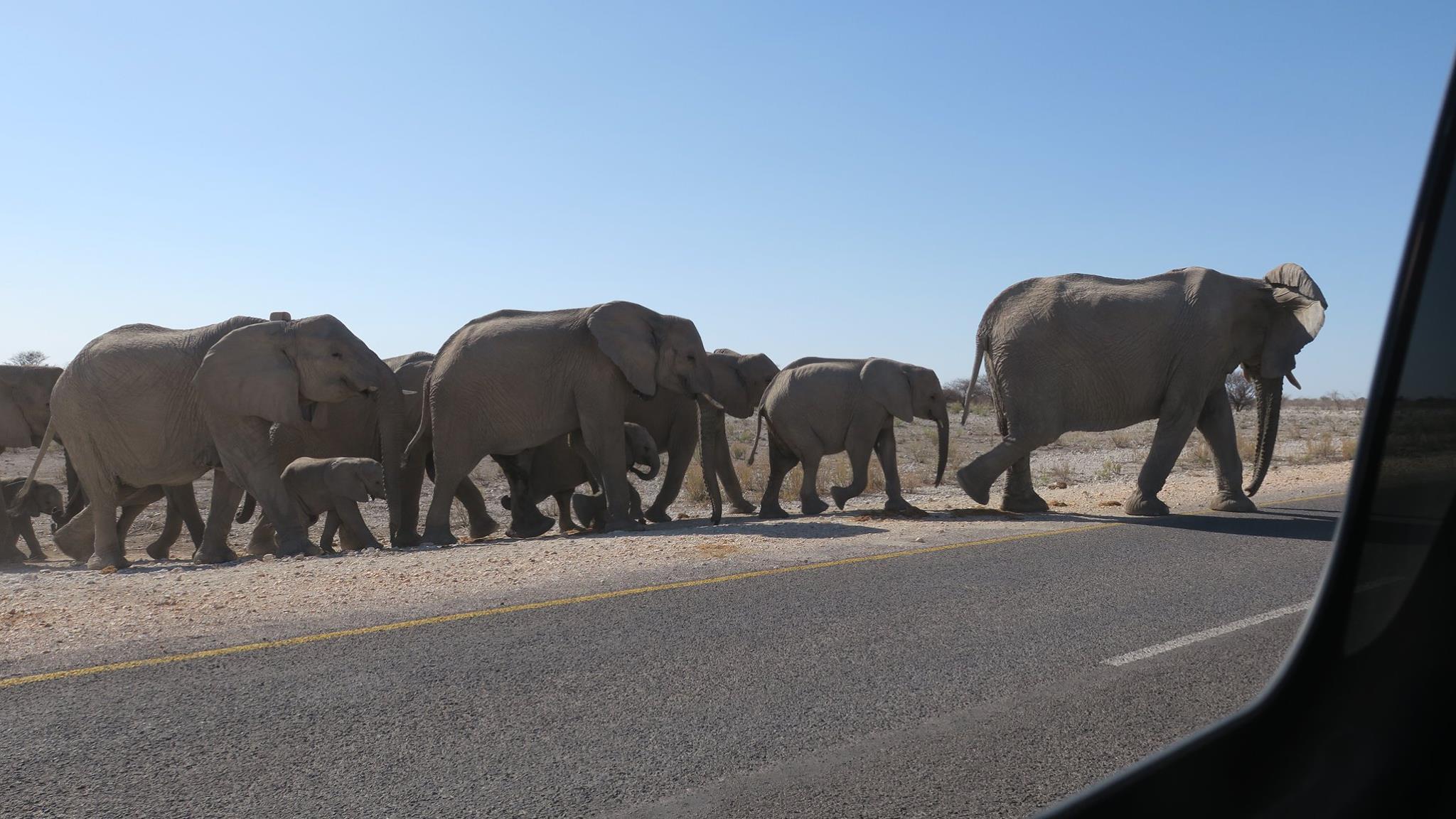 目の前を20~30頭の象が通り過ぎていく姿は鳥肌物でした・・・。