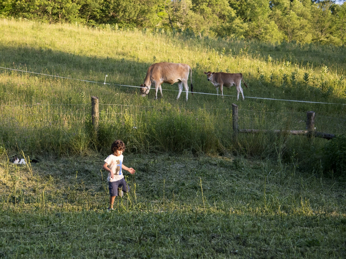 kid in the field below cows at pizza night_cropped.jpg