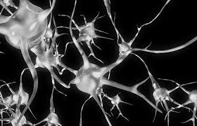 neuron III.jpg