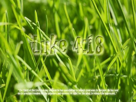 grass_1_800x600.jpg