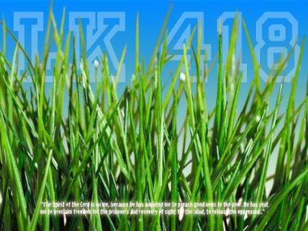 grass_2_800x600.jpg