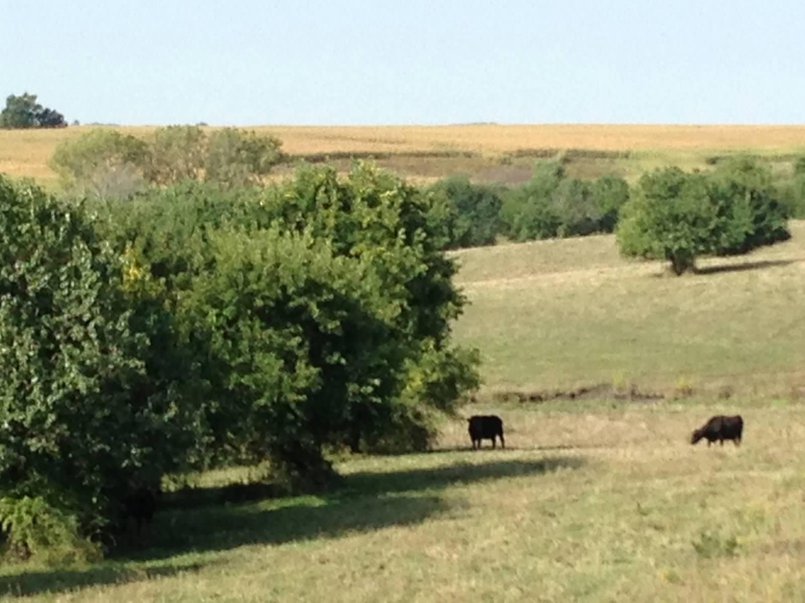 Scenes of a Pasture
