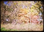 Iowa-Bike-Rides-Fall Colors.jpg