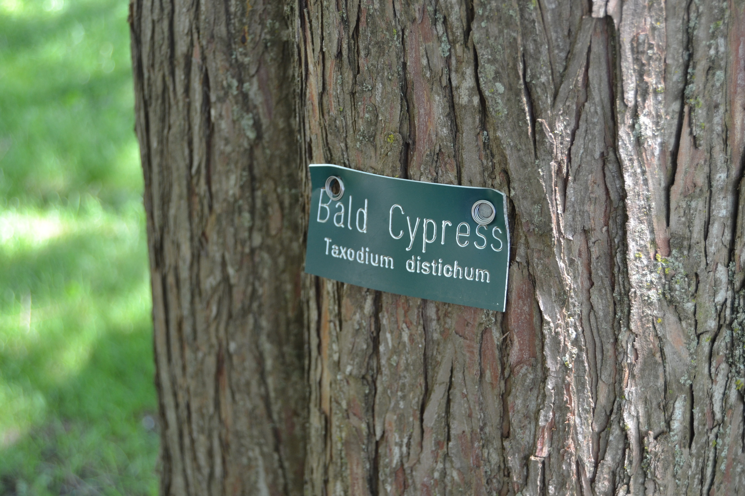 One of the many trees of the arboretum.