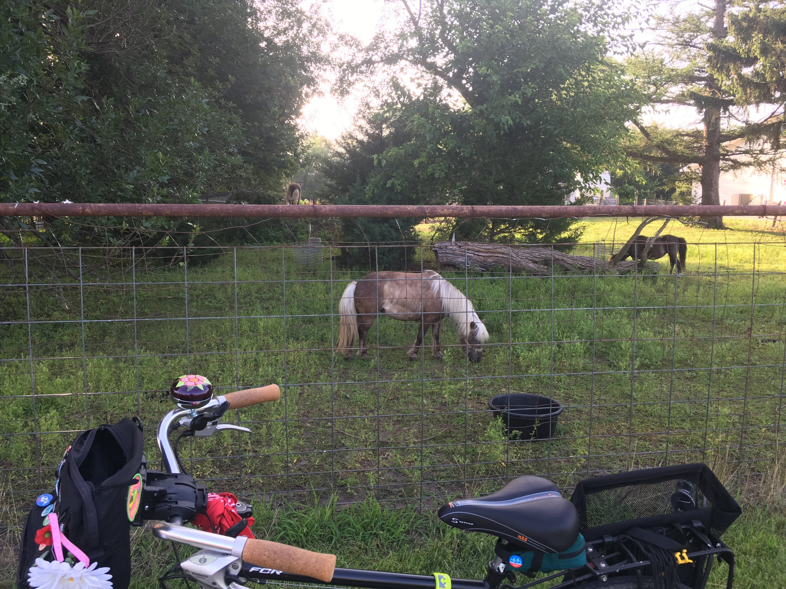 Just took one picture on this ride around town.  Stopped to say hello to the grandfathered town ponies.  I was ignored.
