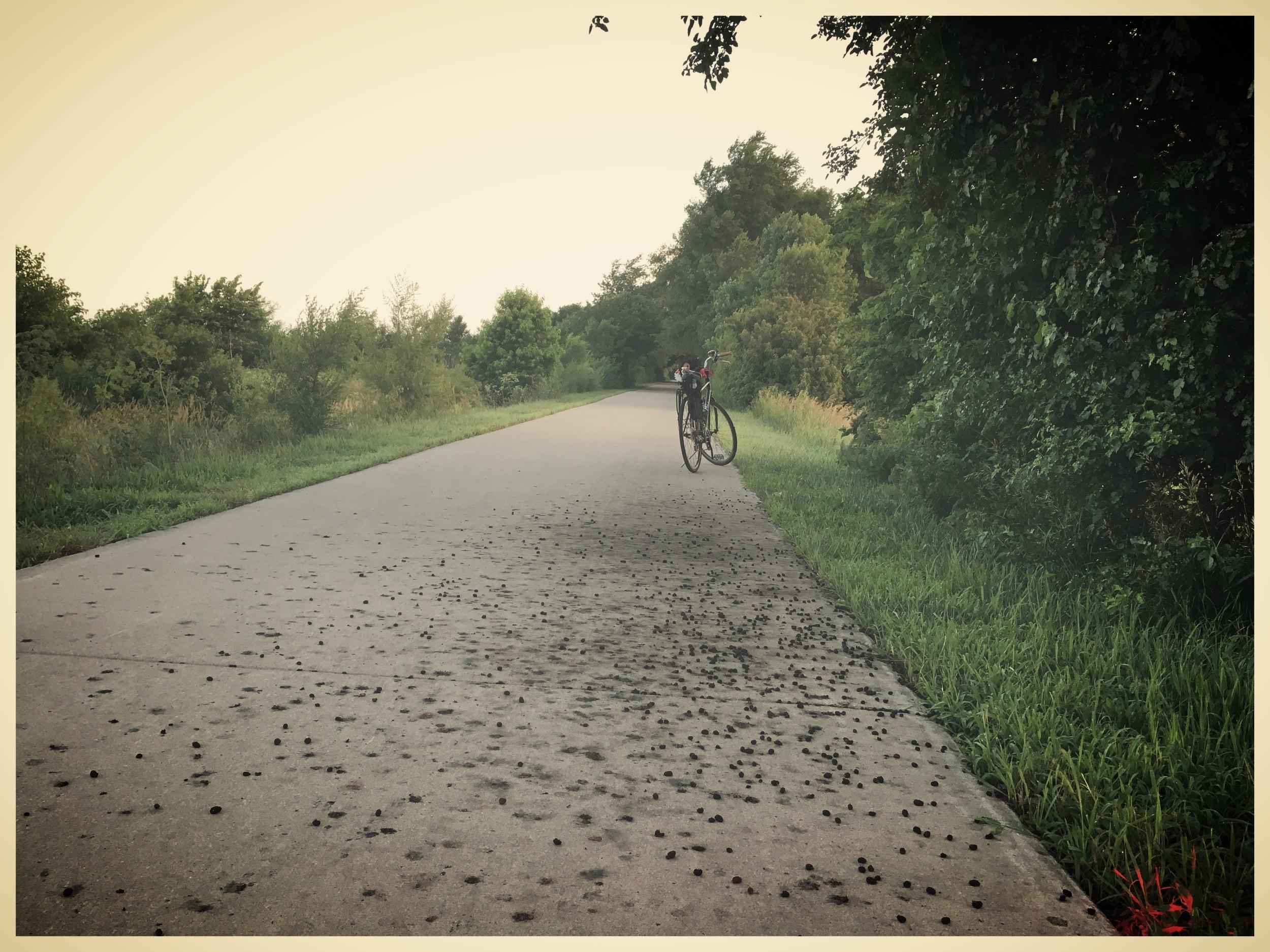 Iowa-Bike-Rides-RRVT