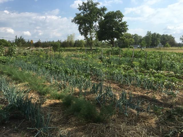 Edwin County Farms - 1.jpg