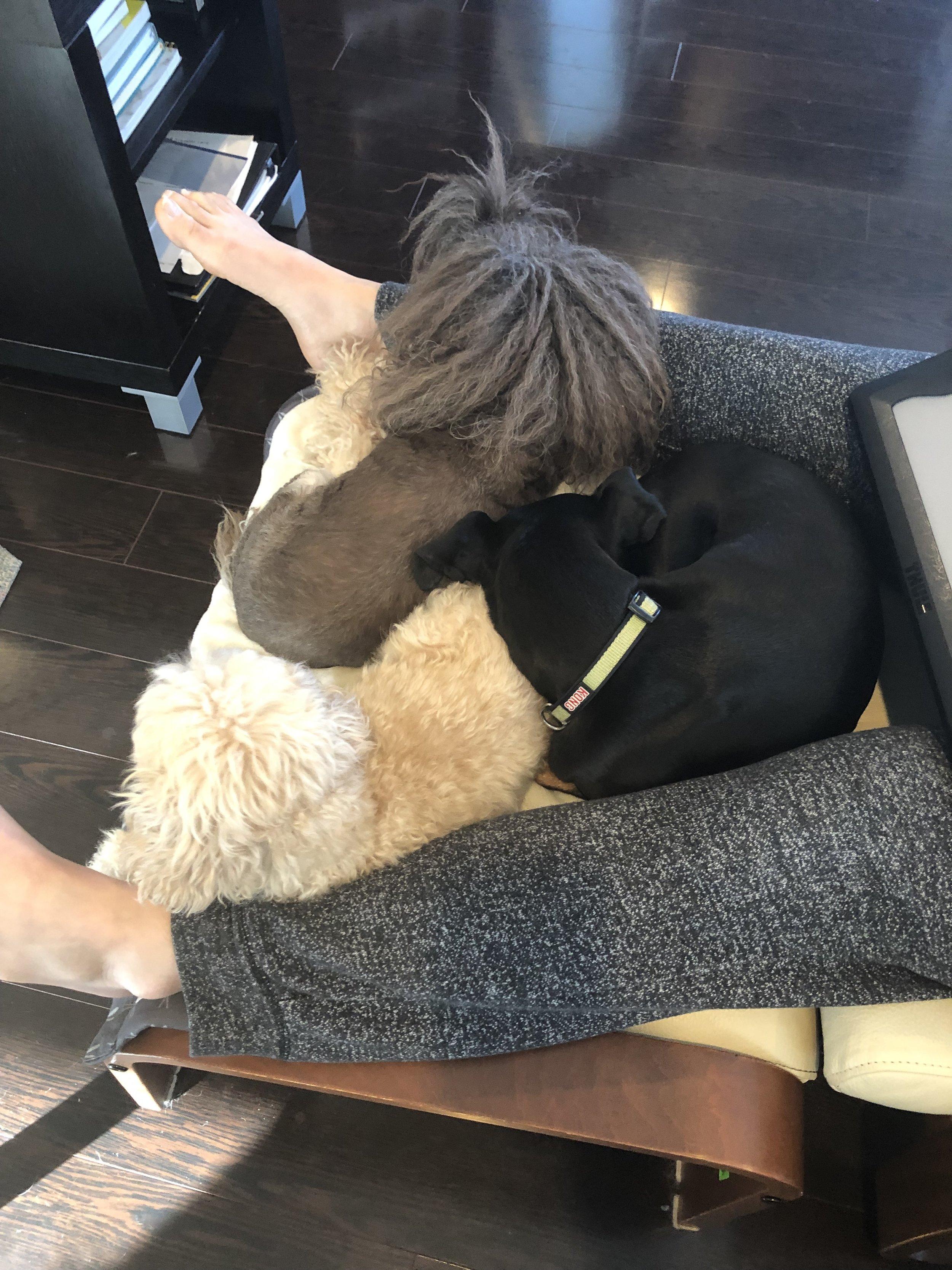 3 cuddling dogs, 1 pair human legs