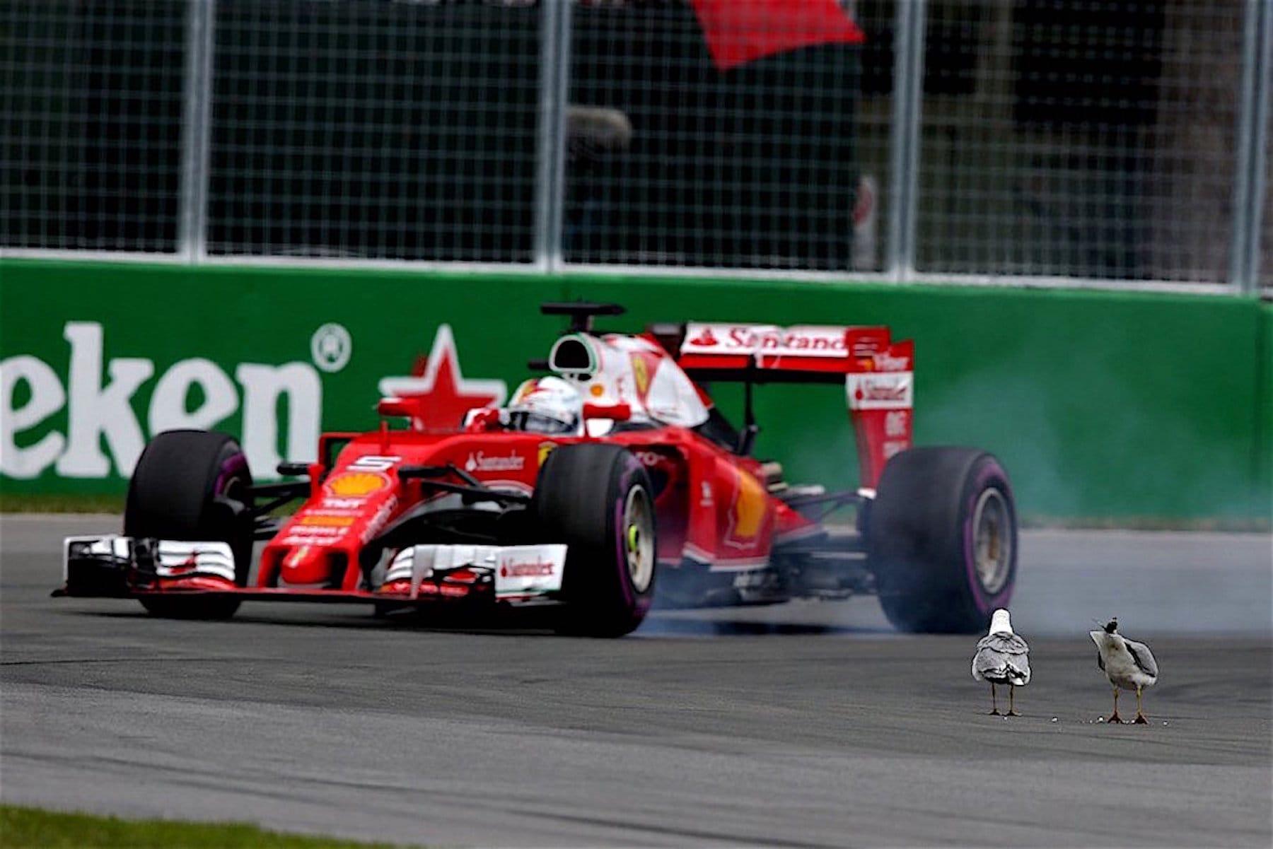 Salracing - Sebastian Vettel and the Seagulls