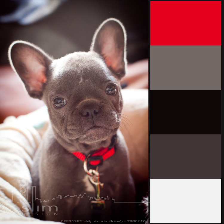 Color palette I generated off an adorable French Bulldog pulled from Pinterest.