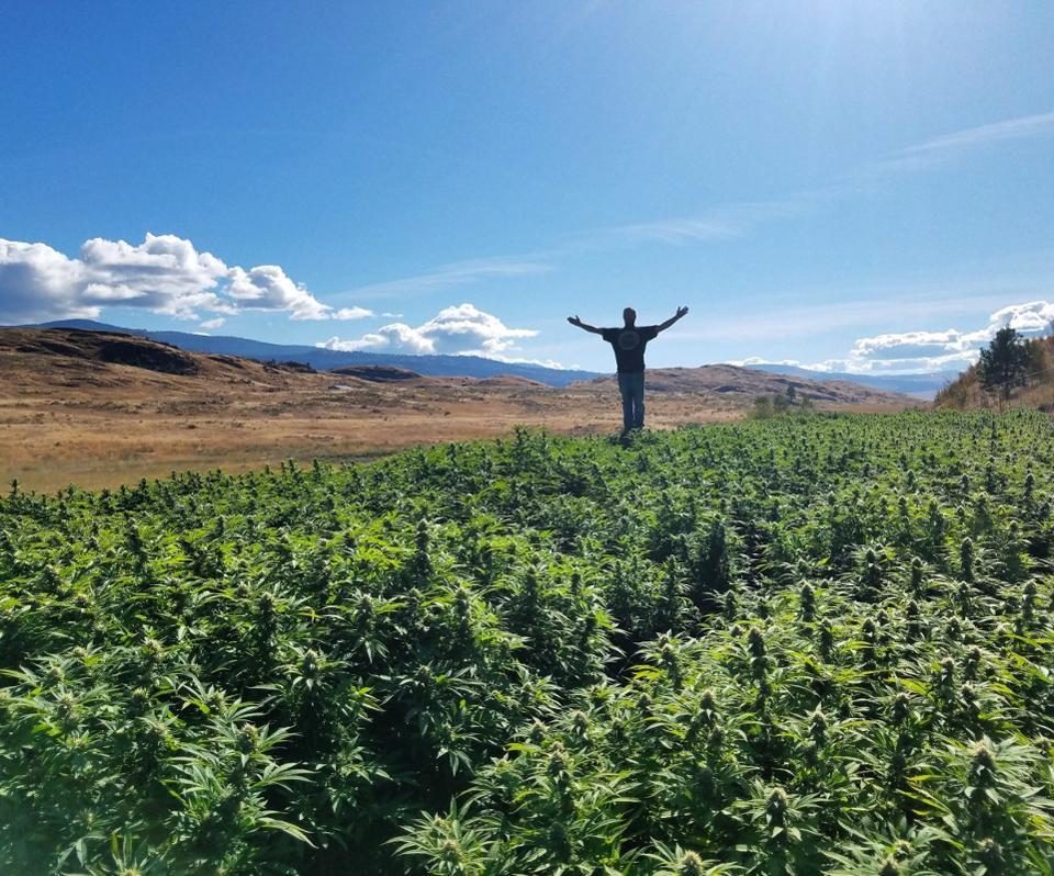 Pickens-Mt-grow-from-greg-james-1200x998.jpg