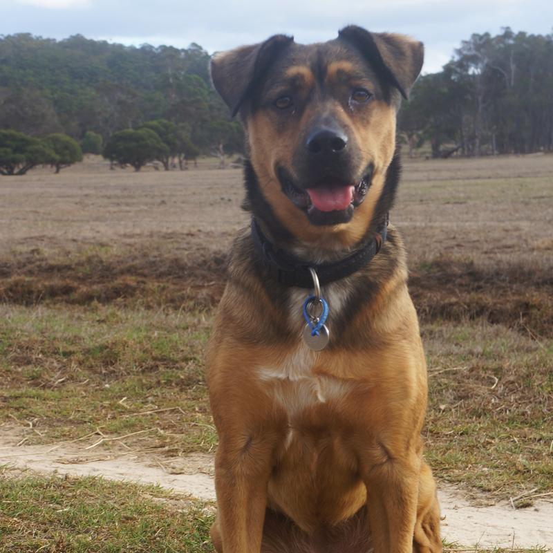 Lola_For Paws Dog Training