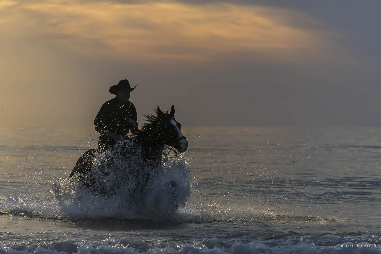 Glistening Gallop