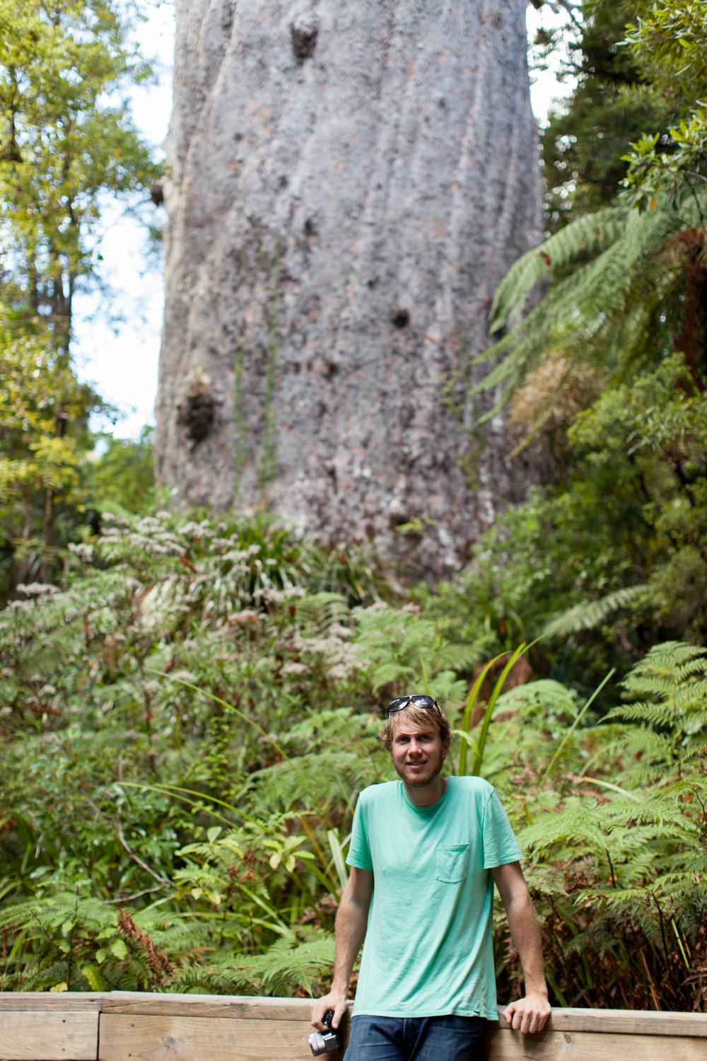 The biggest tree in New Zealand... and it is HUGE.