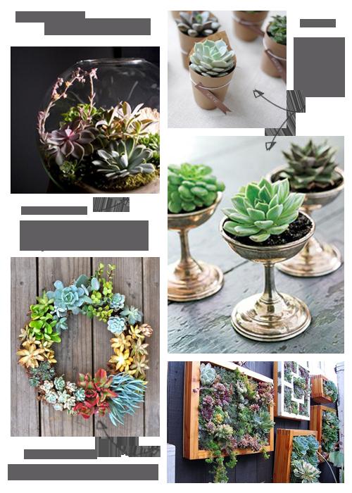 succulents.png