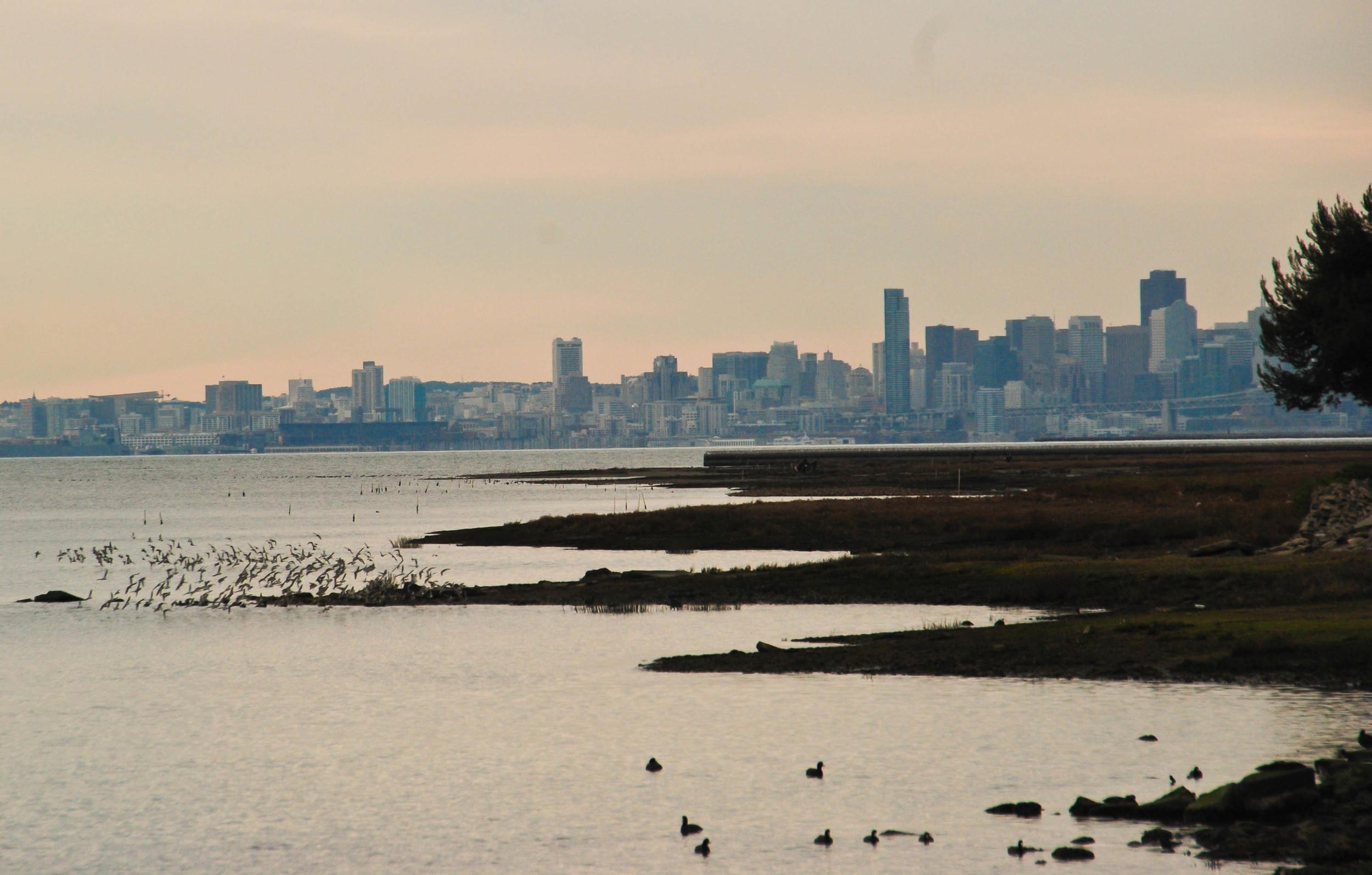 flock & sf skyline.jpg