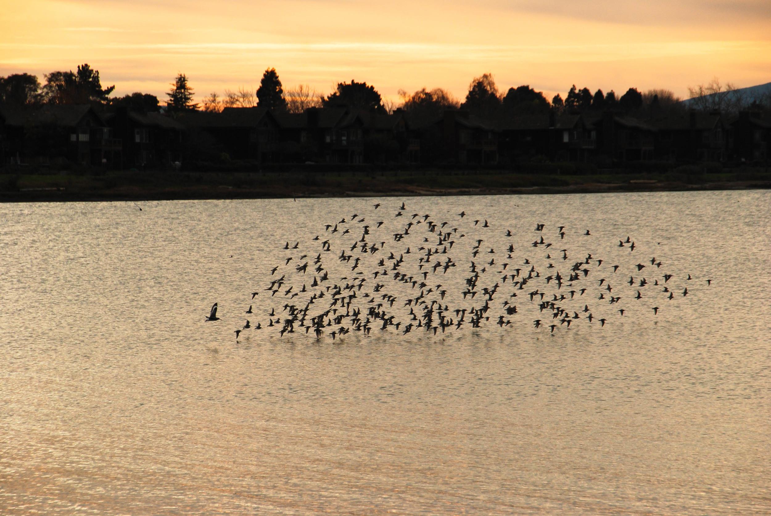 flock & sunset.jpg