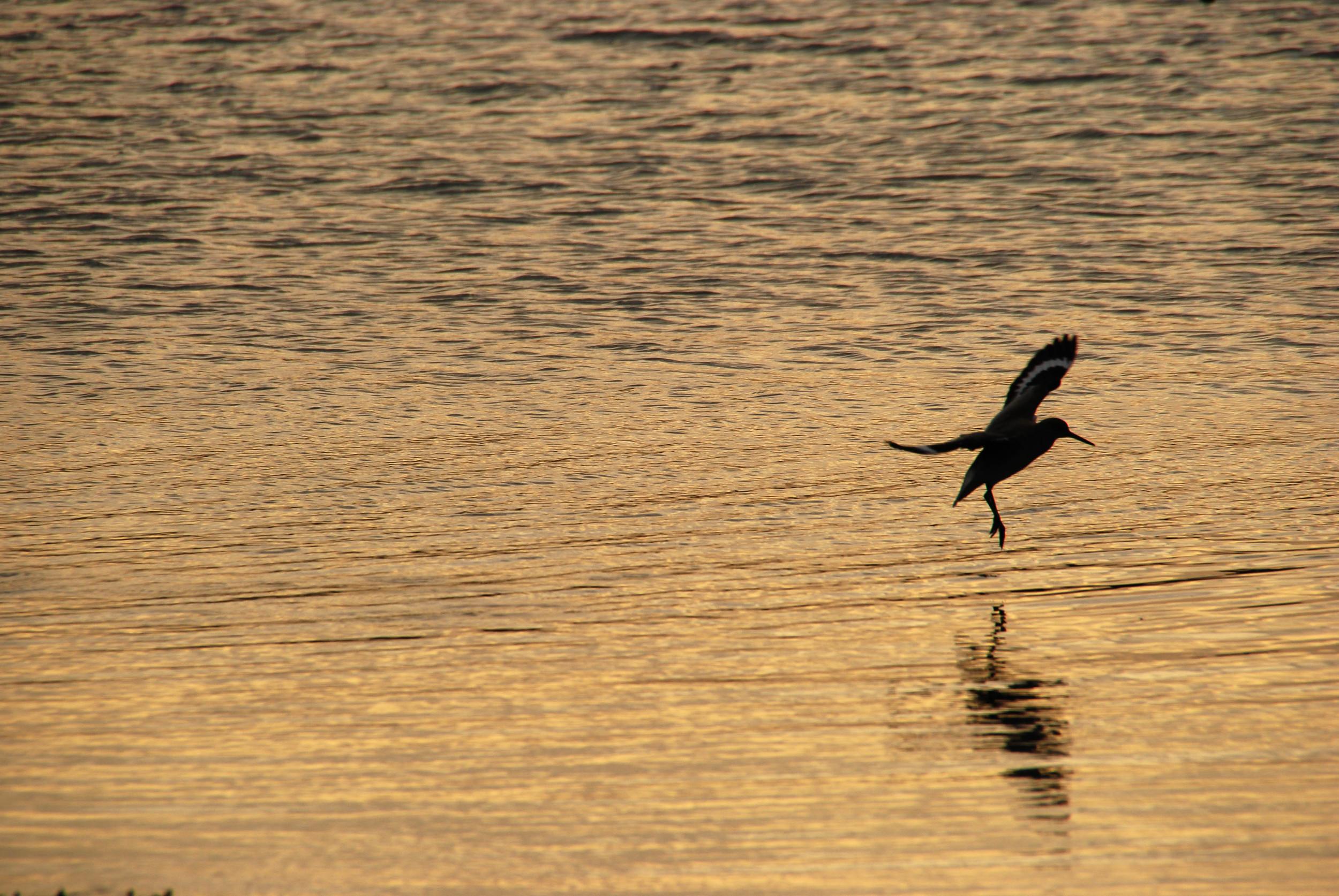 solitary landing.jpg