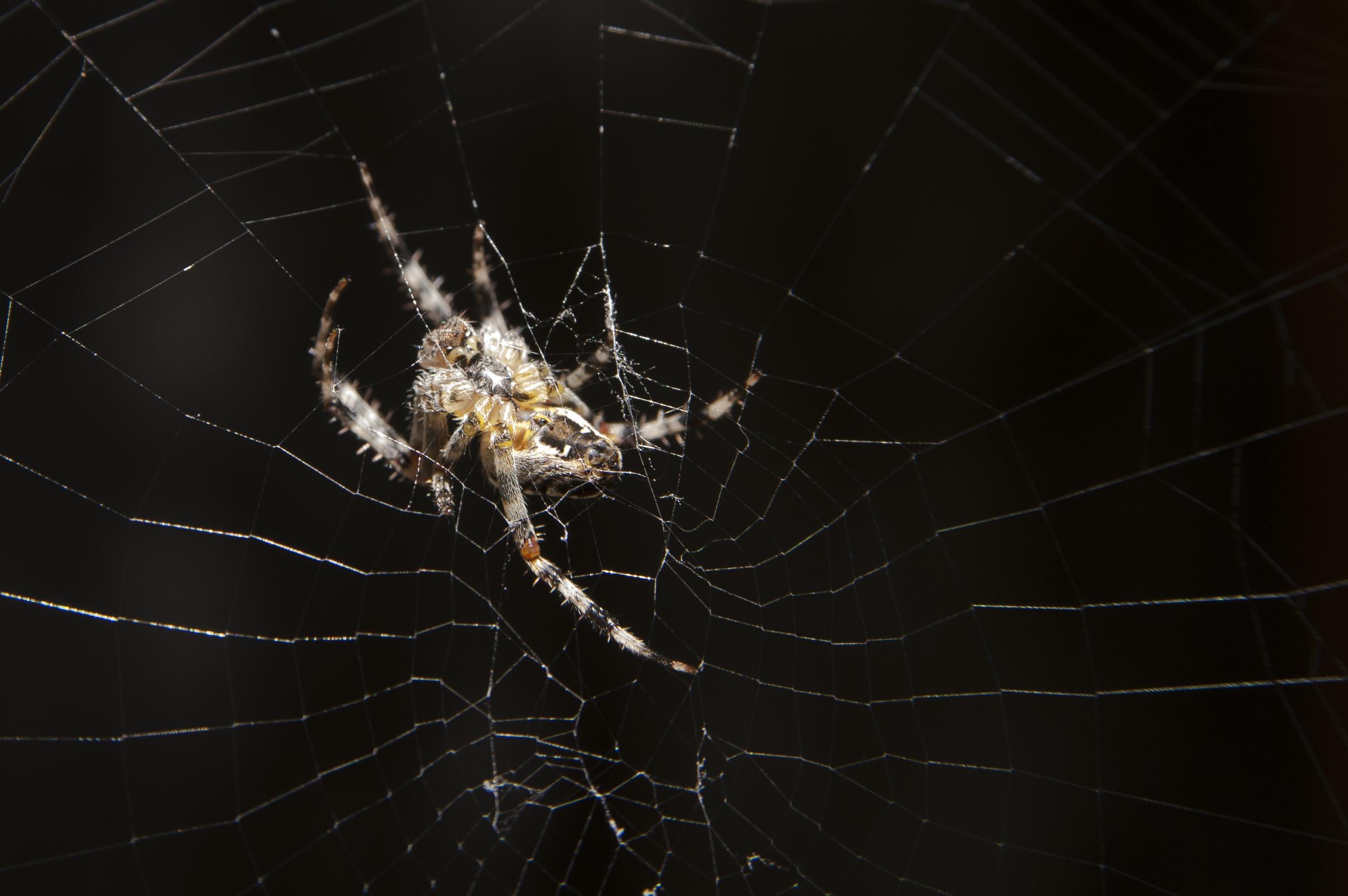 spider 3.jpg
