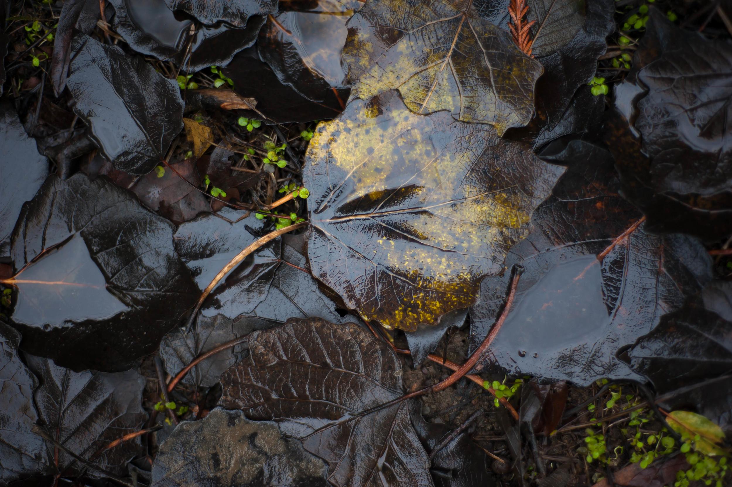 yellow & black leaves 1.jpg