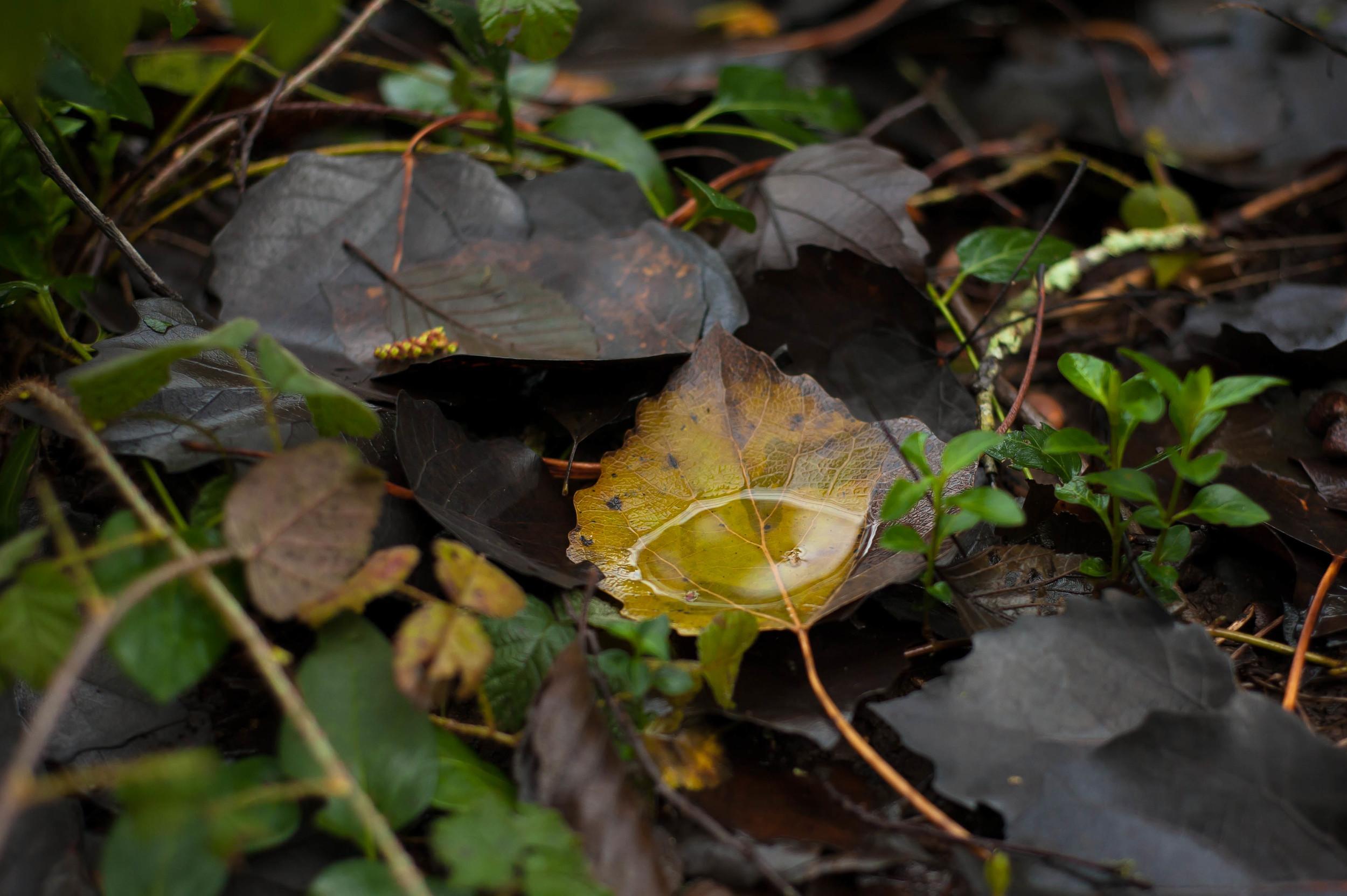 yellow & black leaves 4.jpg