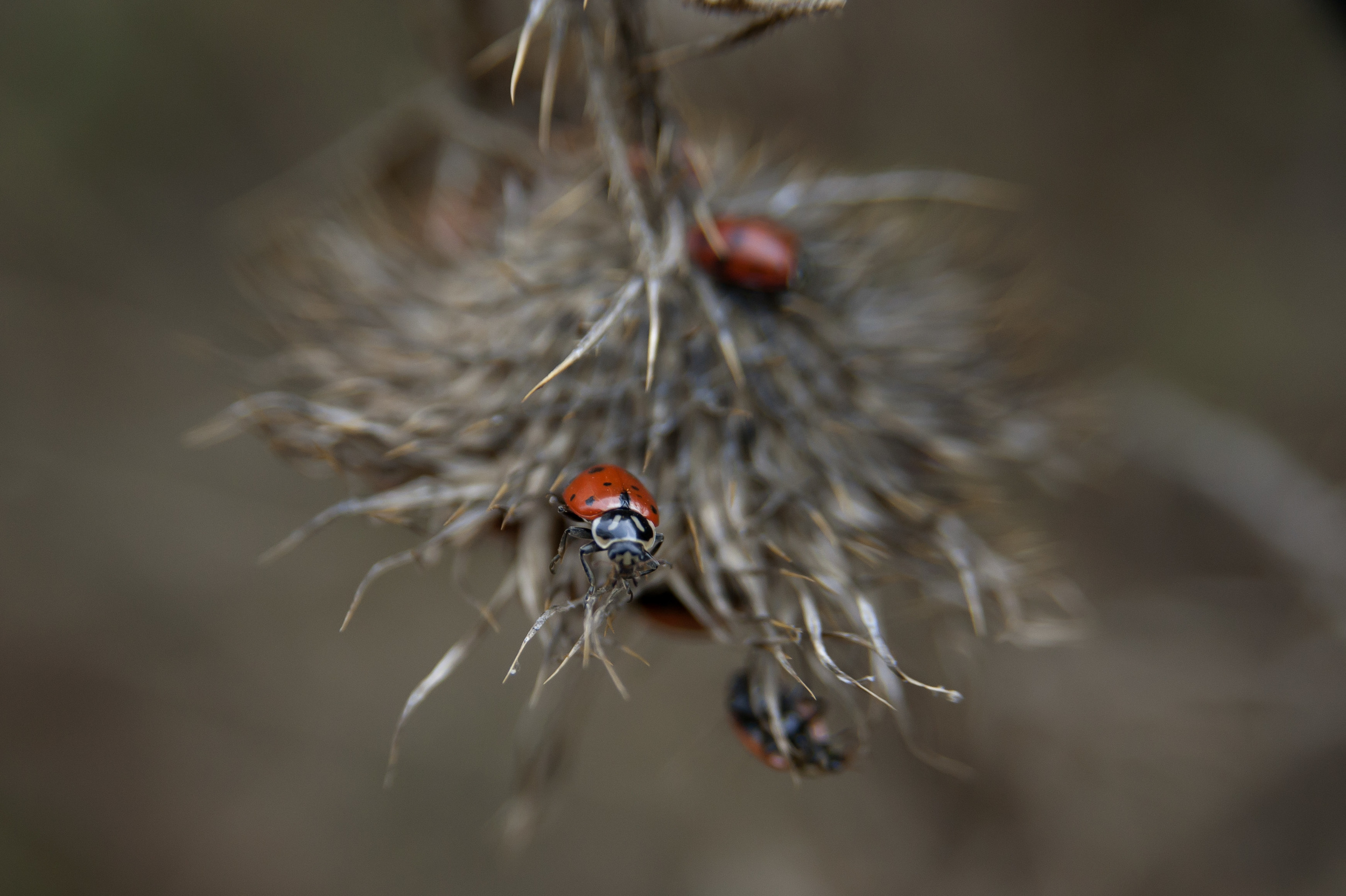 ladybugs 8.jpg