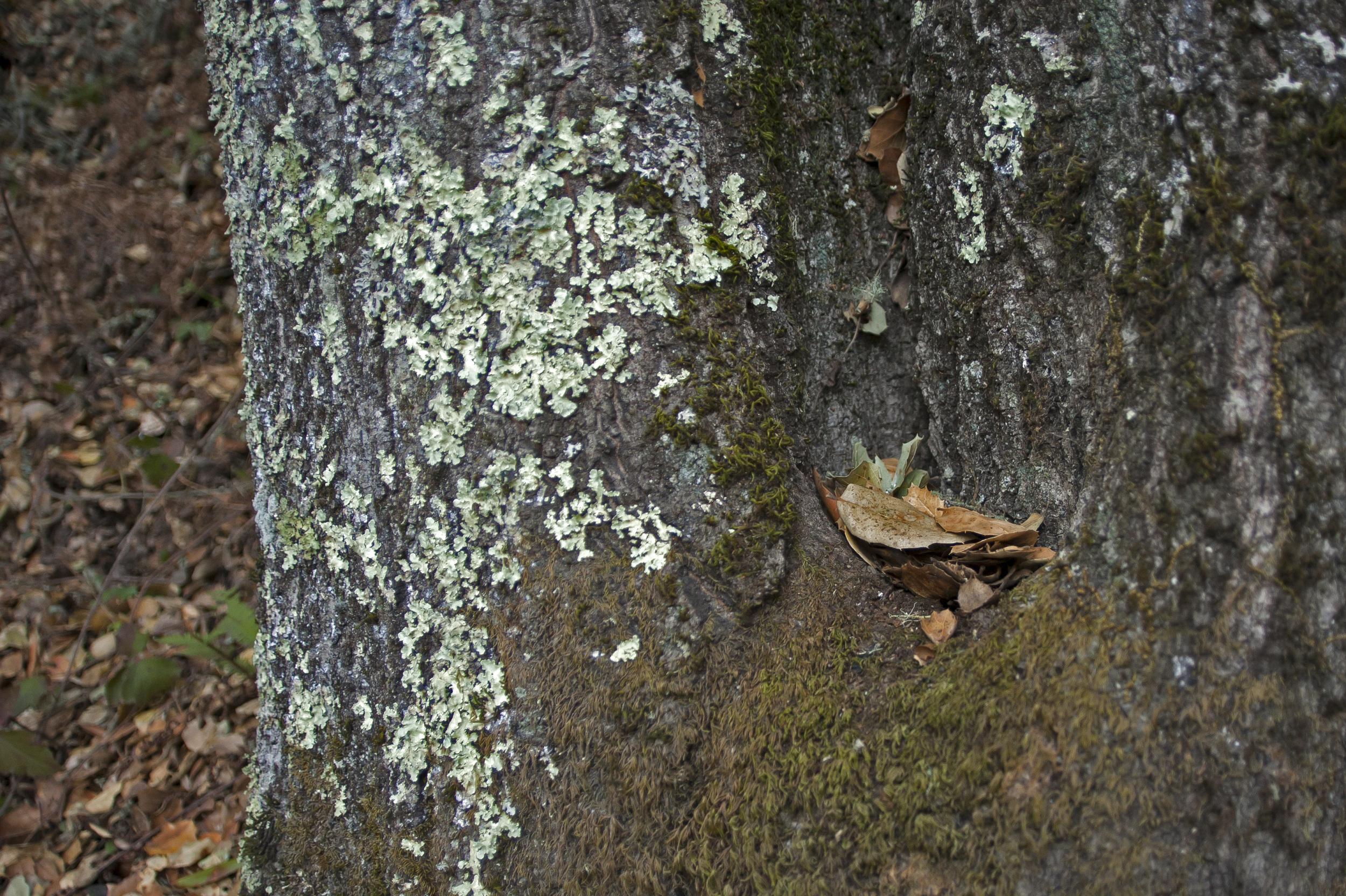 leaves in a crook.jpg