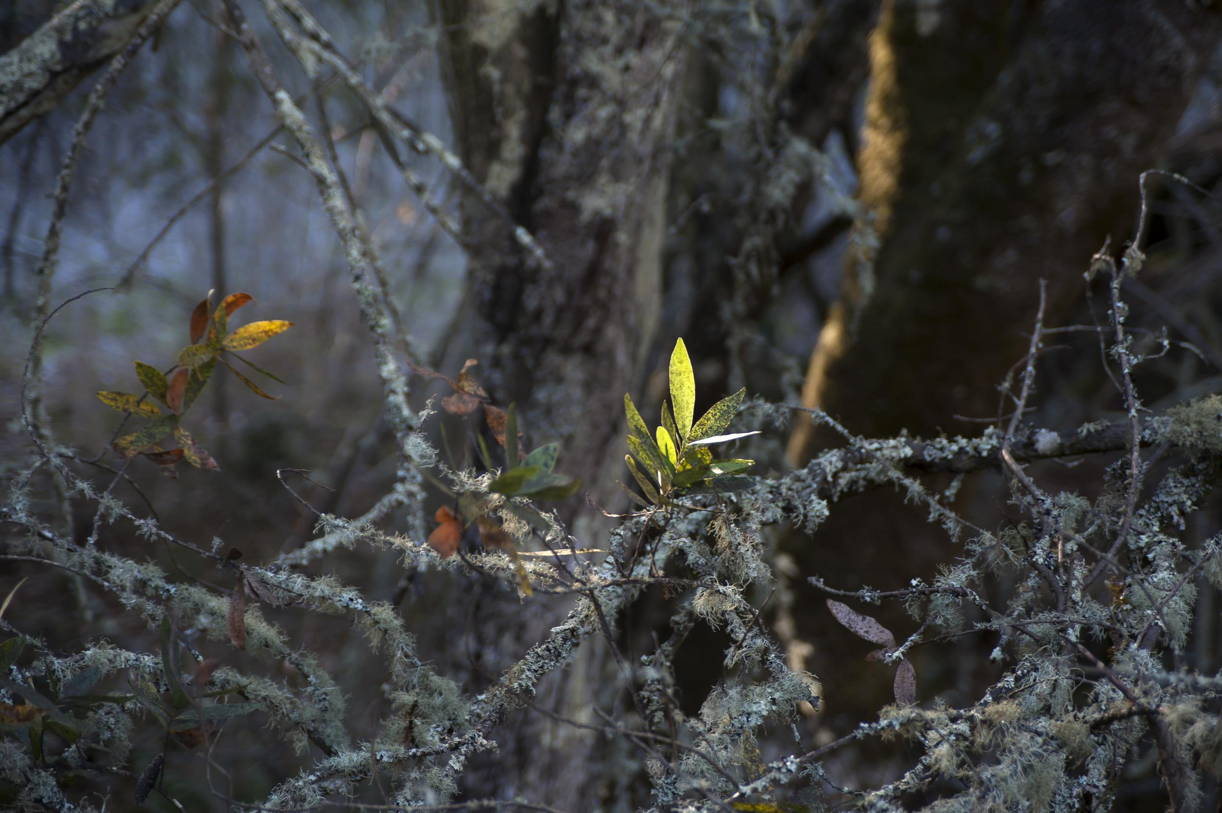 bright leaves in gloom.jpg