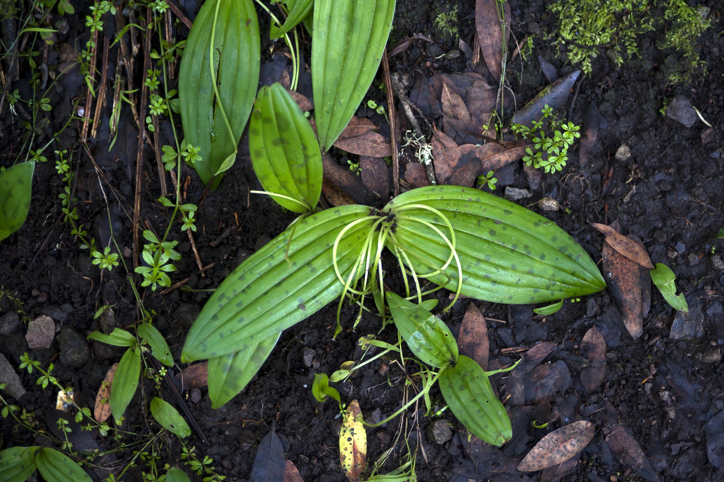 spotted leaf flower aftermath.jpg