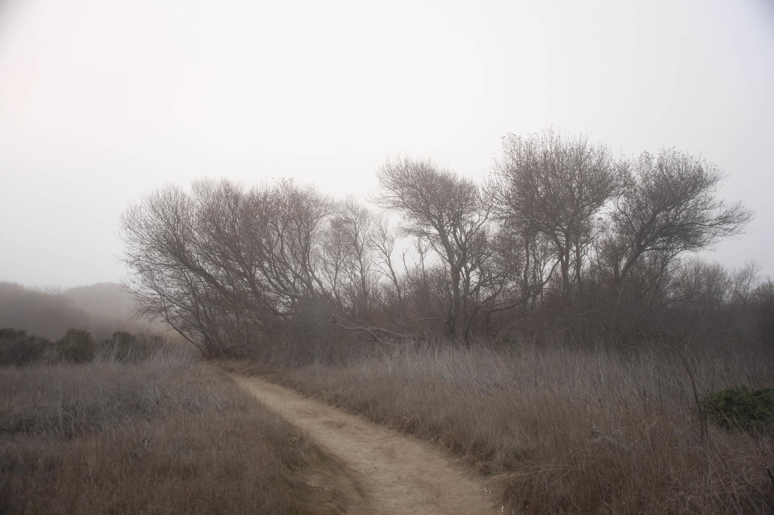 andrew m path 4.jpg