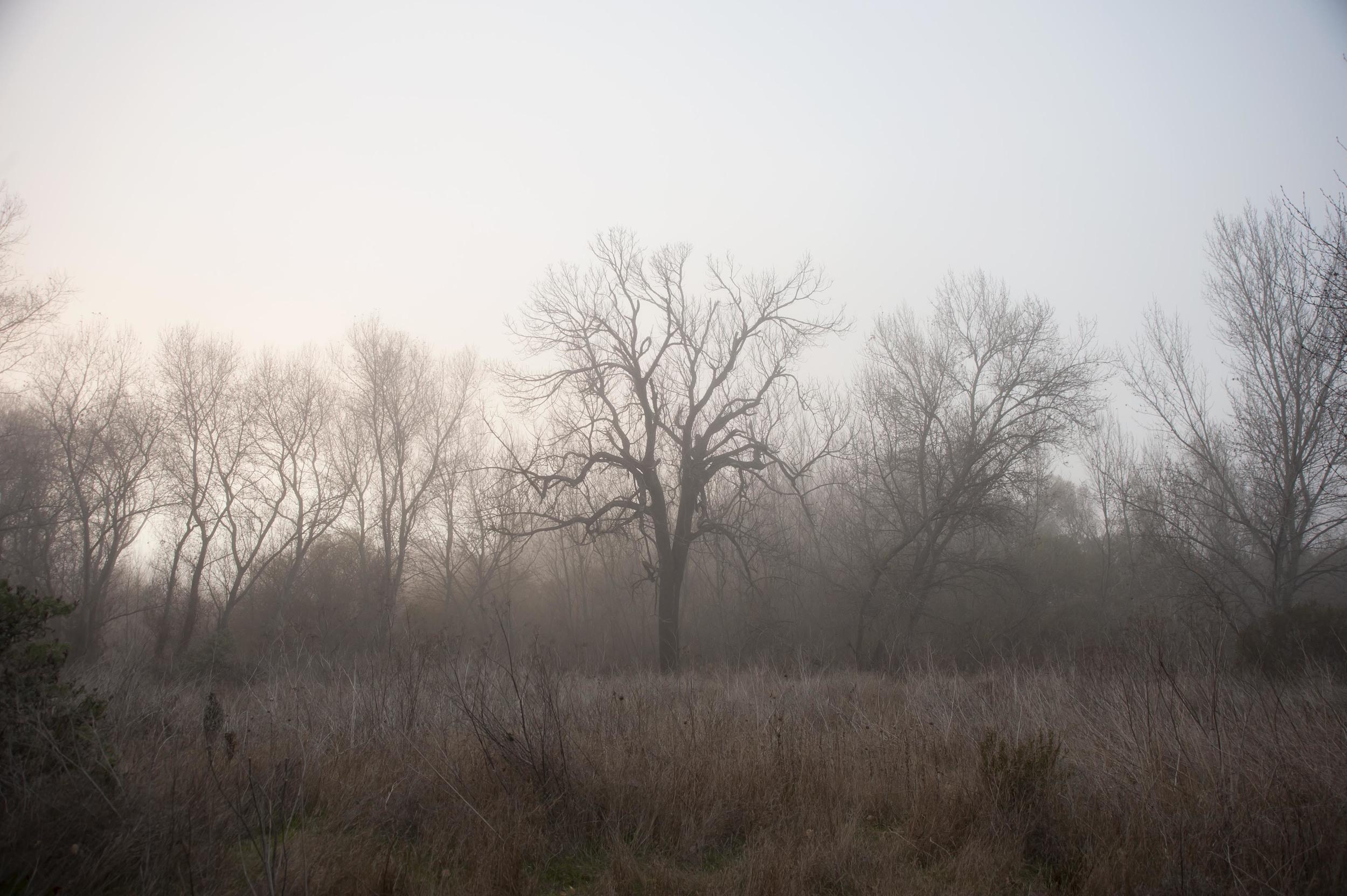 fog trees 6.jpg