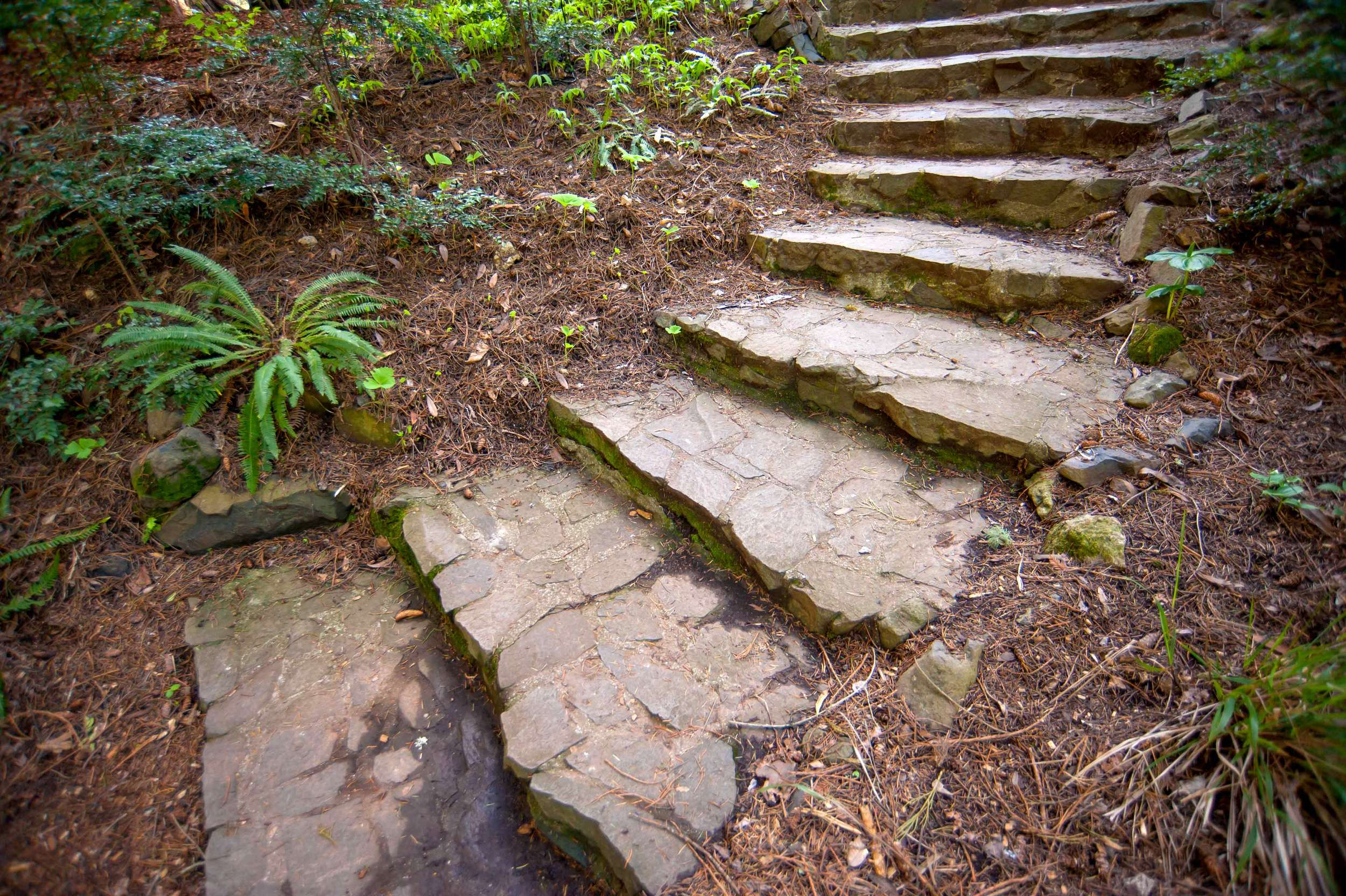 stone-forest-steps.jpg