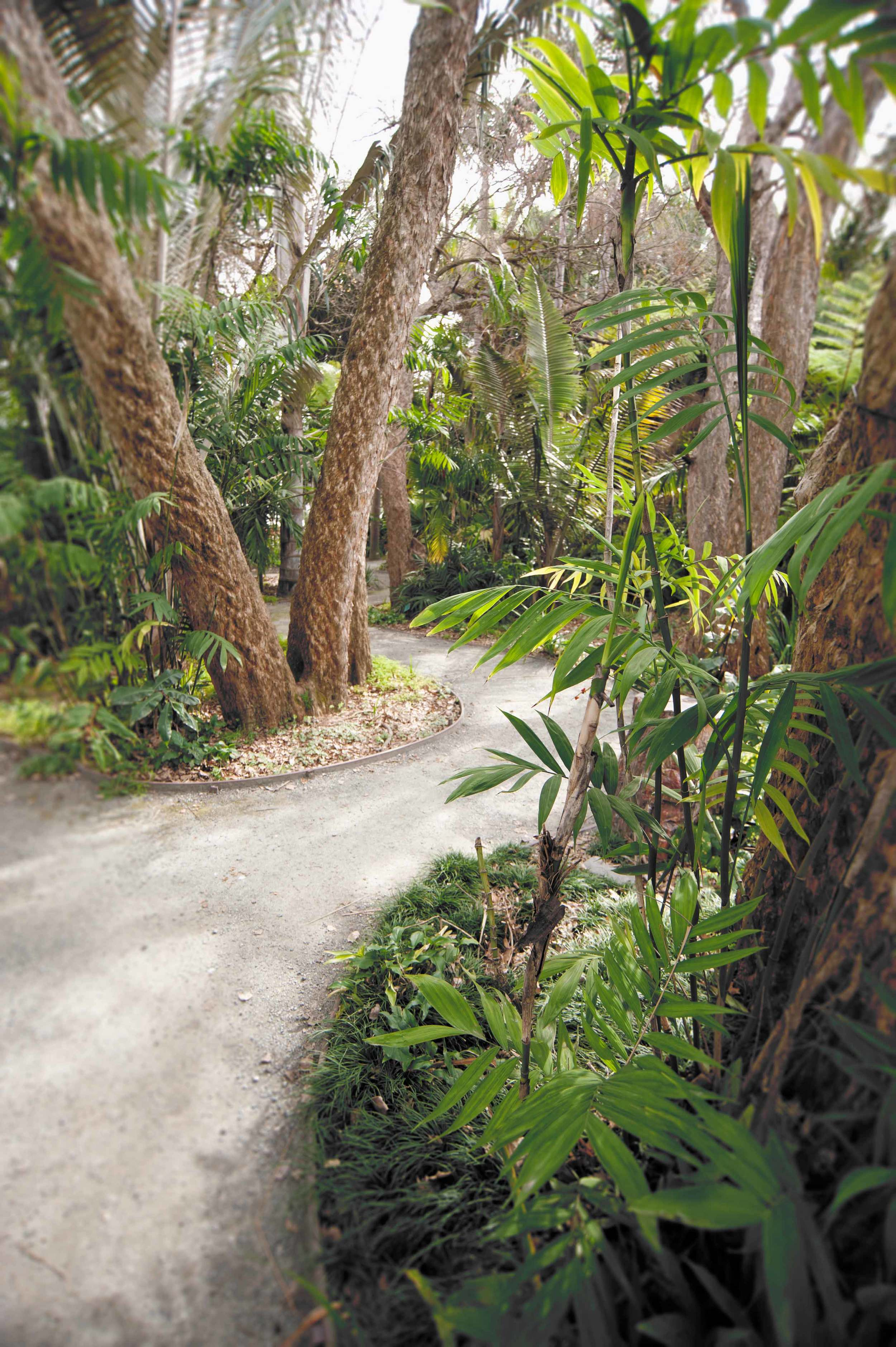 palm-grove-with-blur.jpg