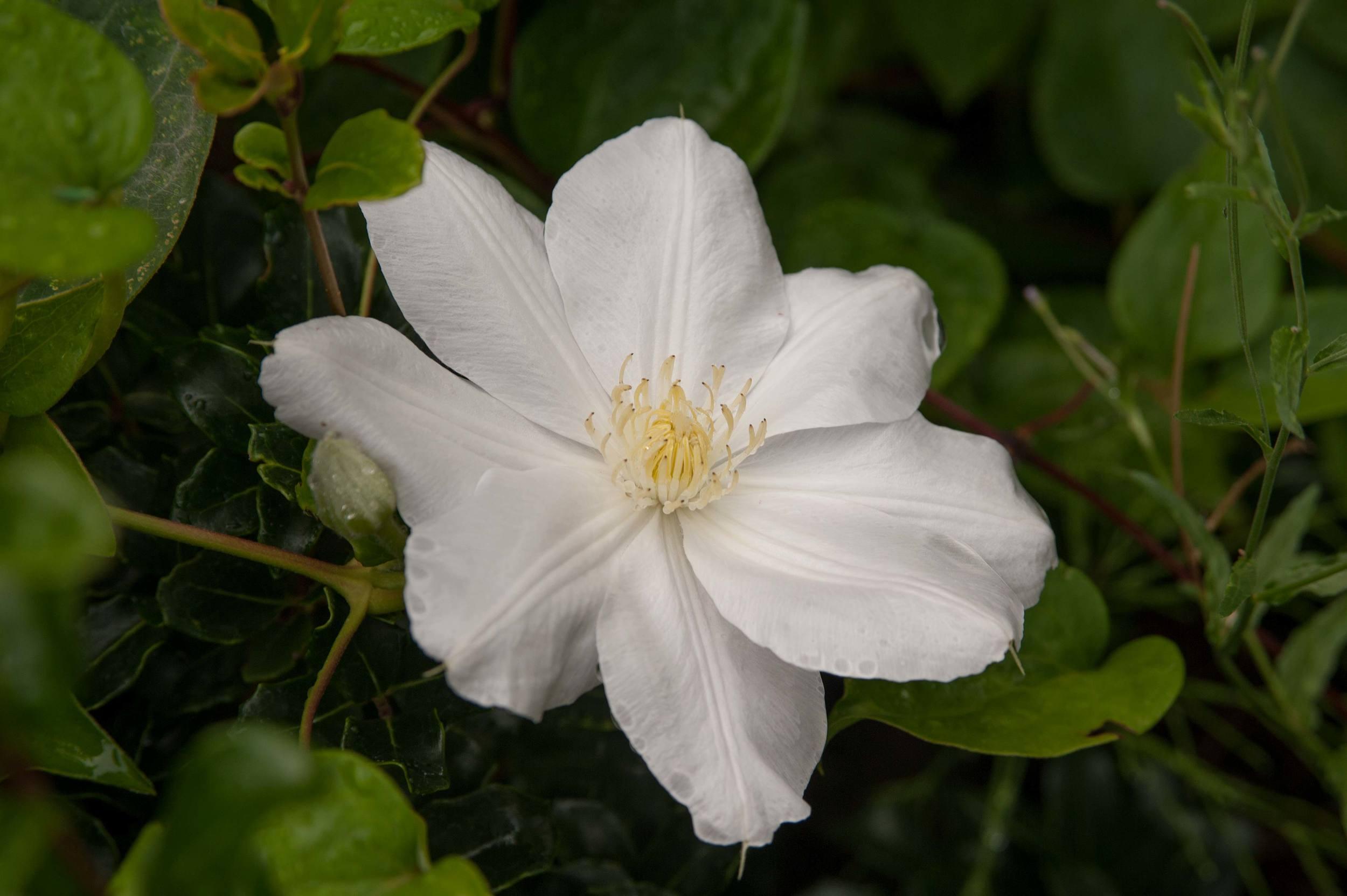 whiteflowernew.jpg
