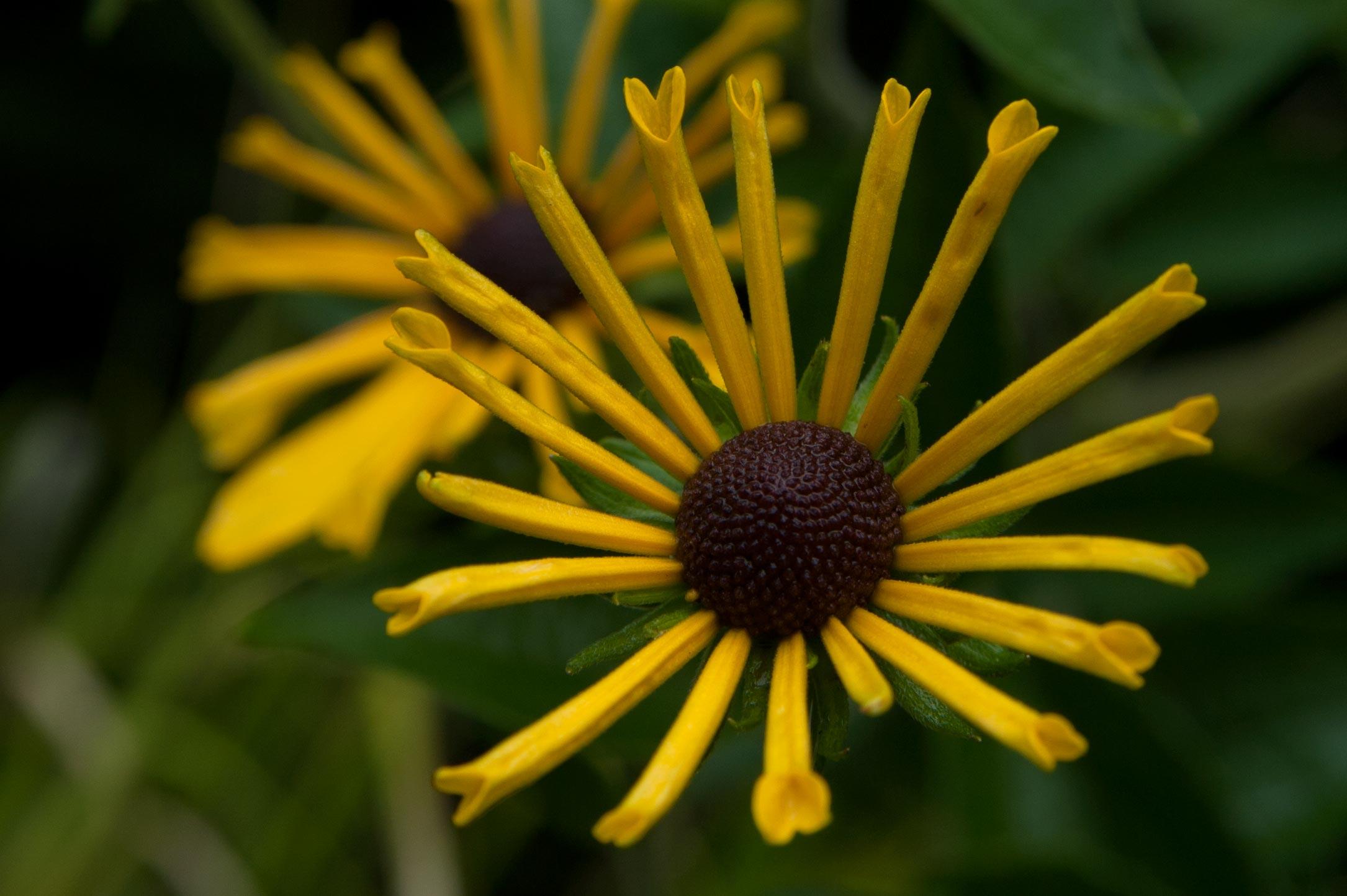 yellowflower2.jpg