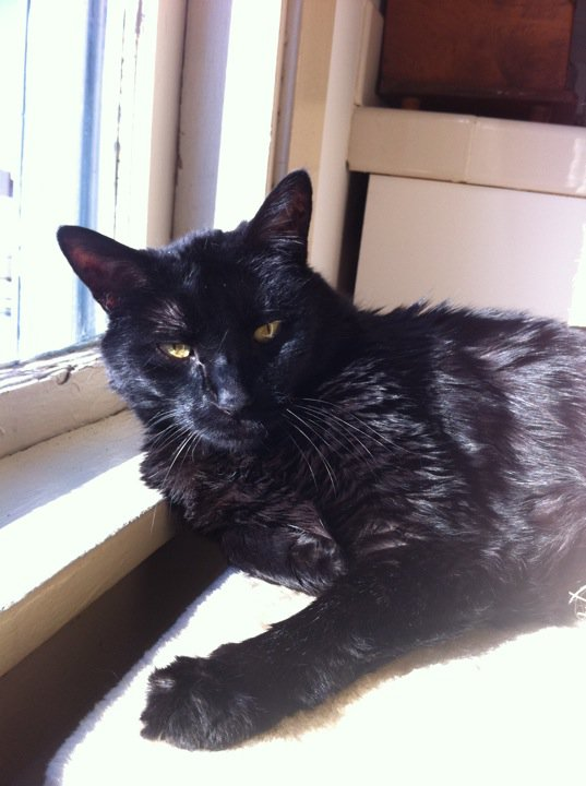 Codille in happier days, basking in the rare Seattle sunlight.