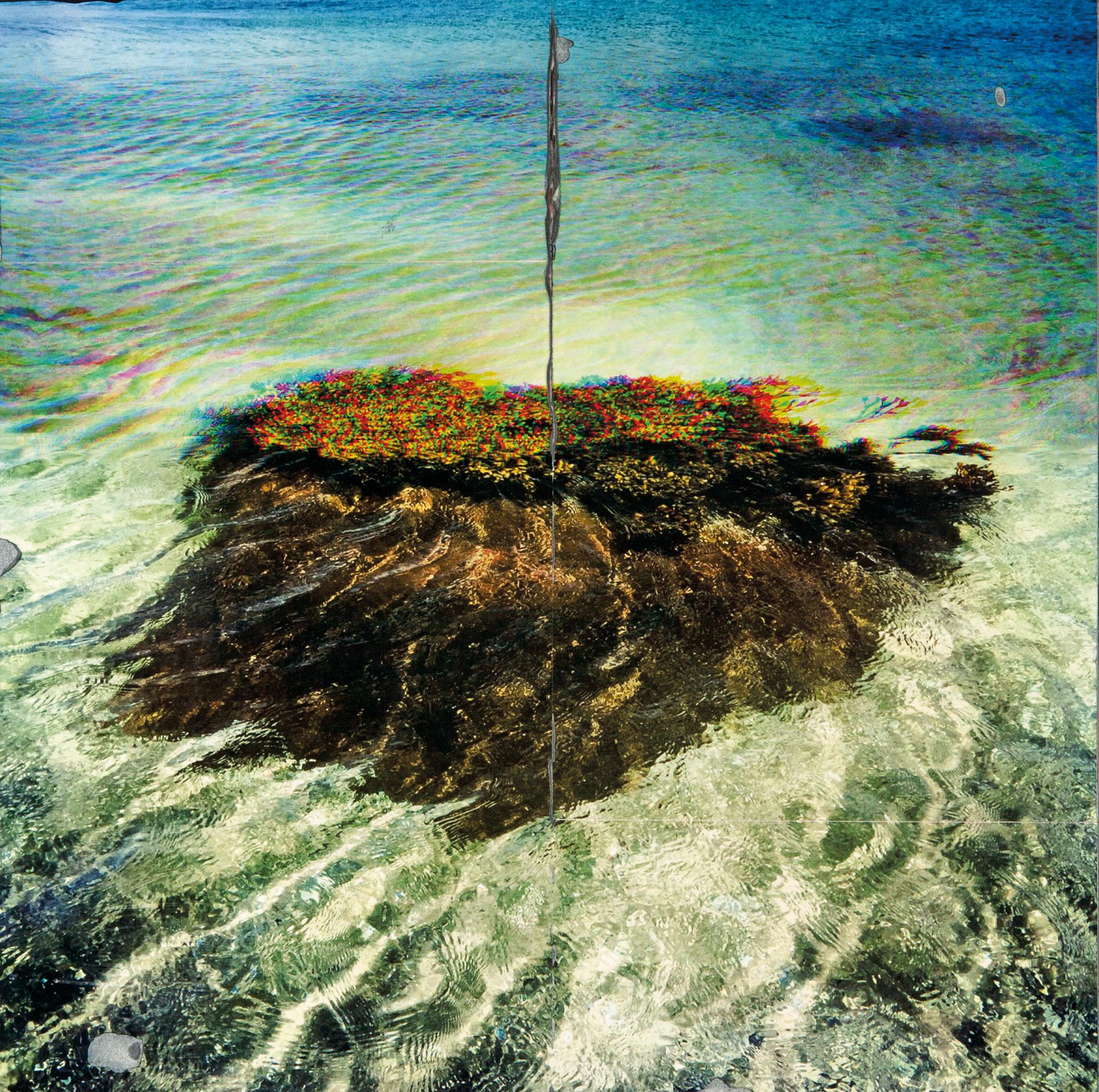 Laurence-CMYK Seaweed_rev2.jpg
