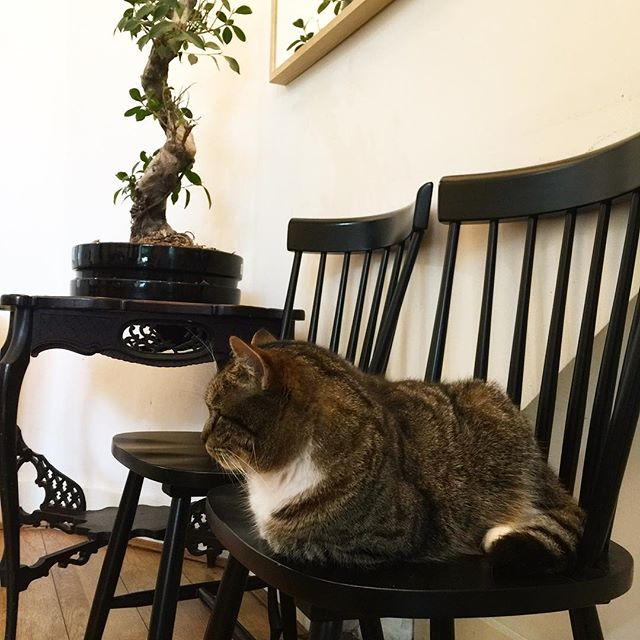 Good morning! Tyson here is helping us with the morning shift 🐈 . . . . #london #hostel #hostellife #wanderlust #travel #vacation #holiday #traveling #traveler #adventure #explore #travelgram #instatravel #travelphotography #cat #catsofinstagram