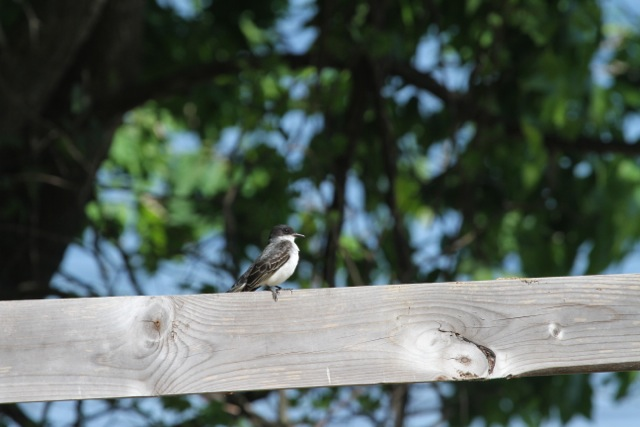 Small bird photo.jpg
