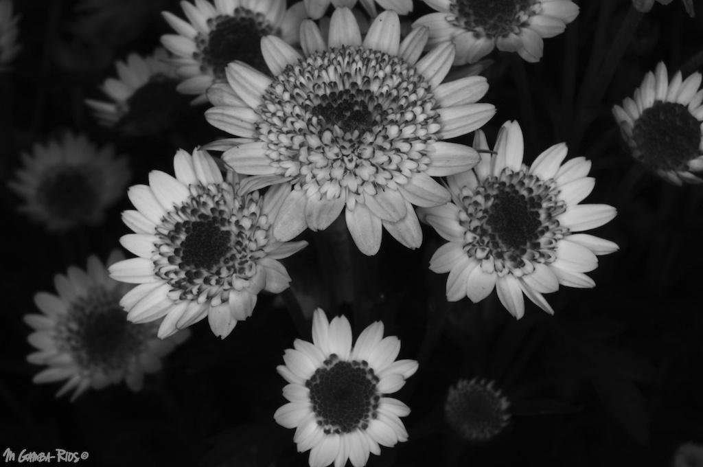 MGRflora-3.jpg