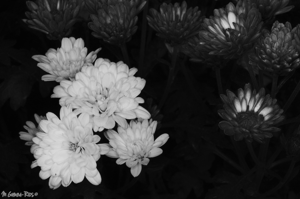 MGRflora-4.jpg
