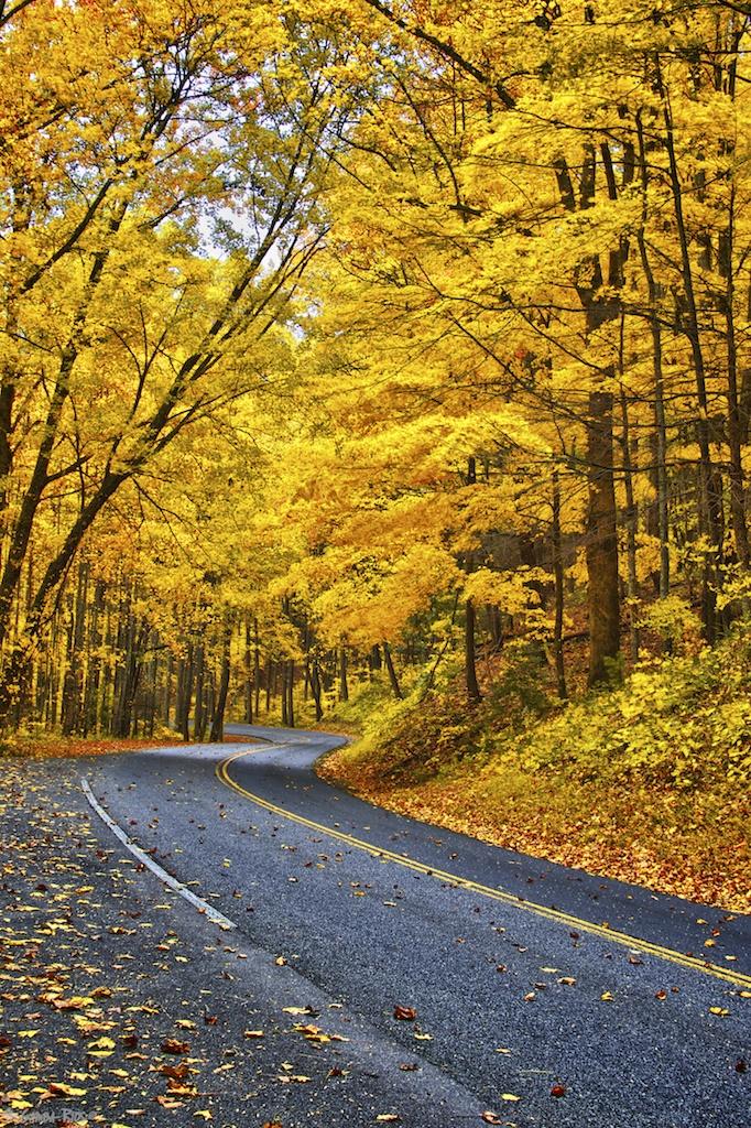 Golden_Road_MGambaRios